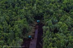 APRIL is pulping the rainforest - but its customers are walking away | Greenpeace UK