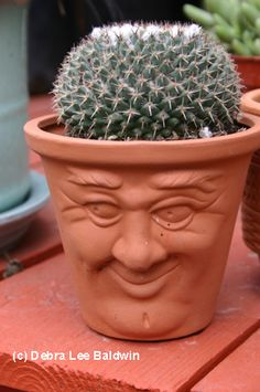 Pot head with cactus.