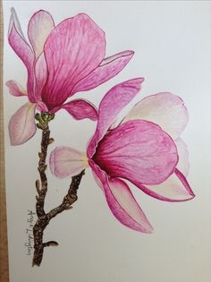 MAGNOLIA FLOWERS. Painted by me in watercolours using an Anna Mason online video tutorial