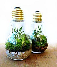 Light Bulb Terrarium Planter Live Moss Urban door DoodleBirdie, $19,00