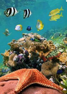 Under The Ocean, Sea And Ocean, Fauna Marina, Underwater Life, Underwater Plants, Beautiful Ocean, Amazing Nature, Ocean Creatures, Sea World