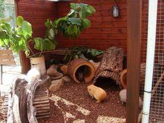 Guinea pig cage idea.                                                                                                                                                                                 More