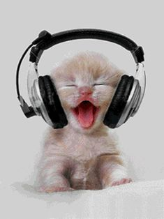 Kitty Beats - Is this Boo Boo Kitty (for all the Empire Fans? techno kitty, gangster rap kitty, hip hop kitty or Rock kitty? Kitty Dee Jay Music Animated baby Kittens ❤༻ಌOphelia Ryan ಌ༺❤ Cute Kittens, Cats And Kittens, Kittens Meowing, Ragdoll Kittens, Bengal Cats, Cute Funny Animals, Cute Baby Animals, Funny Cute, Funniest Animals
