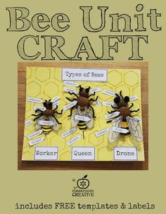 Bee unit craft and activity! Includes free templates and labels. Perfect for studying bee anatomy and body part labeling!