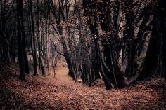 Fall... by kachahaha