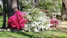 Resultado de imagen para plantas de jardines de interior e exterior