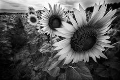 fotografia bianco e nero - Google Search