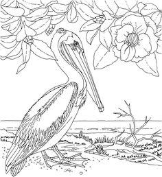 Раскраски дикие и домашние животные, птицы, рыбы » Страница 32