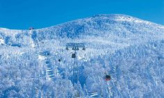 Natural art! Come and see Juhyo, frost-covered trees in Zao | JAPAN Monthly Web Magazine