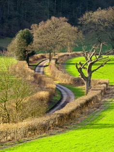 Winding Country Lane near Nettlebed in the Oxfordshire countryside on a sunny January afternoon. Photo Tony Murtagh.