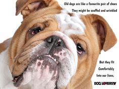Quotes about dogs. Dog Quotes Funny, Fun Dog, Felt Hearts, Best Dogs, French Bulldog, Dog Lovers, Animals, Animales, Animaux