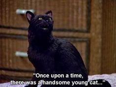 Funny Animal Memes, Cat Memes, Dankest Memes, Funny Cats, Salem Sabrina, Sabrina Cat, Salem Cat, Salem Saberhagen, Sabrina Spellman
