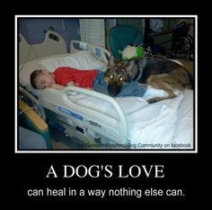 A Dogs Love can heal in a way nothing else can <3  http://www.lastdaydogrescue.org/