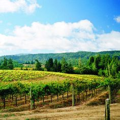 Taste your way through Anderson Valley - Sunset