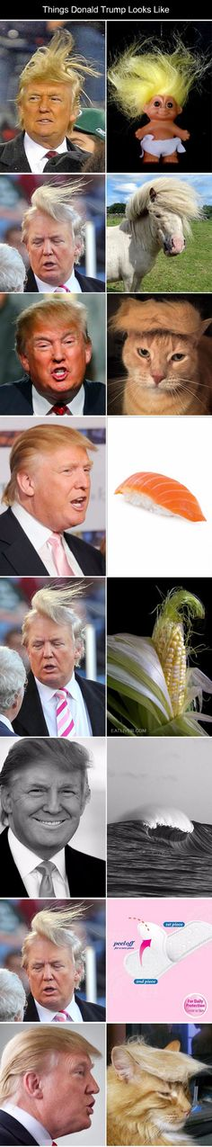 Since Obama has been badgered for his birth certificate, if Donald Trump becomes president, he'll be nagged about proving if that's his real hair or not.  Donald Trump Look Alikes