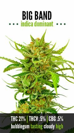 Become a member of the best marijuana lovers social network: http://angrybud.com/buzzfeed