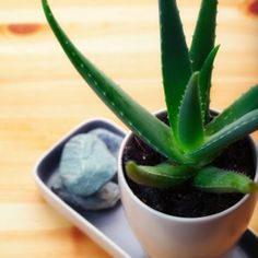 10 plantes qui attirent des nergies positives voitures - Les plantes depolluantes purifier l air de la maison ...