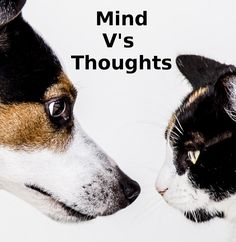 How to control your thoughts and keep a peaceful mind with this very simple mindful practice that anyone can do, anywhere, anytime. - enjoy