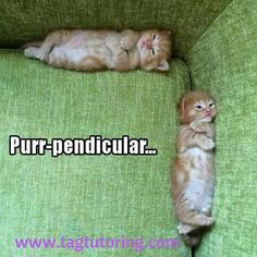 Perpendicular...the more you know : )