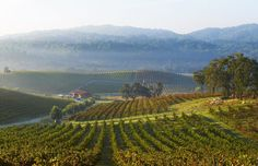 Paso Robles wine is some of the best produced within California's wine regions; these six Paso Robles wineries rank tops. Paso Robles Wineries, Best Wine Clubs, Barolo Wine, Virginia Wineries, Wine Tasting Events, San Luis Obispo County, Wine Sale, California Wine, California Coast