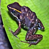 Best frog exhibit in Costa Rica at La Paz Waterfall Gardens Nature Park