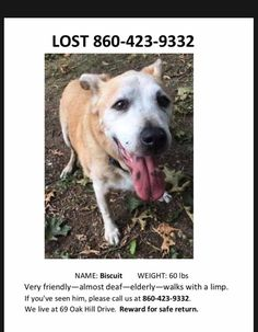 Tracy Brunette FosbergCT Dog Gone Recovery Volunteer Network Yesterday ·   Missing since Friday: Name Biscuit Weight 60 lbs Very friendly, almost deaf, elderly, walks with a limp Call 860-423-9332. Owners live at Oak Hill Drive area of Willimantic tan white brown