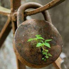 Natur, schon toll wo Pflanzen überall wachsen können