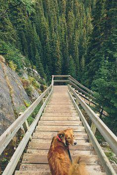 democratictravelers:  Lake Louise, Banff, Alberta, Canada.