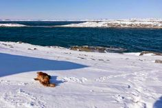 Alberth likes snow