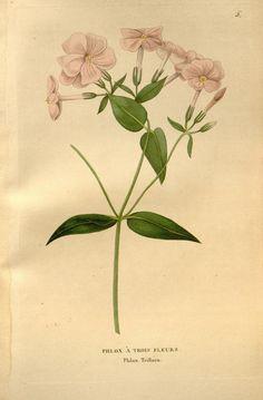 v.1 (1832-1833) - Annales de flore et de pomone : - Biodiversity Heritage Library