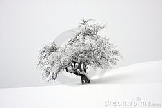 Photo about Nice contrast with Small isolated tree covered with snow on a slope with foggy background. Image of lonely, branches, covered - 18551664 Lone Tree, Single Tree, Contrast, Snow, Stock Photos, Nice, Cover, Photography, Image