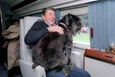 Ronald Reagan's dog   Lucky sits in Reagan's lap in the presidential helicopter. 1985. (Ronald Reagan Library)