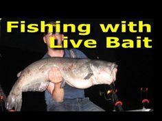 Fishing with live bait - Best big catfish bait. Big Catfish, Catfish Bait, Catfish Fishing, Crappie Fishing, Carp Fishing, Best Fishing, Saltwater Fishing, Kayak Fishing, Fishing Tips