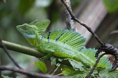 Tortugero National Park, Costa Rica