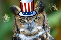 Google Image Result for http://conservationcubclub.com/wp-content/uploads/2010/07/Owl-Patriotic.jpg