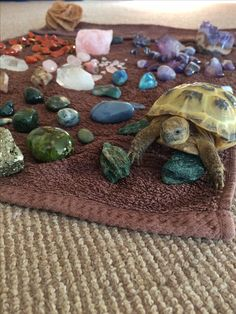 mr eddie man, inspecting my freshly cleansed collection 💦🔮 🐢