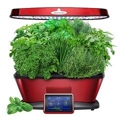 Miracle-GRO AeroGarden Bounty Elite with Gourmet Herb See... https://www.amazon.ca/dp/B06WWKLKTV/ref=cm_sw_r_pi_dp_U_x_FhwnBbJJV2EJV
