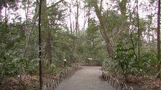 #japan#japon#travel#temple#park