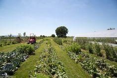 Se conturează Ferma Gardenbio Vineyard, Outdoor, Sun, Plant, Lawn And Garden, Outdoors, Vine Yard, Vineyard Vines, Outdoor Games