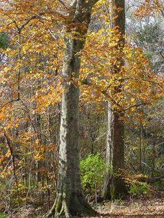 louisiana national parks photos | Louisiana State Arboretum State Preservation Area