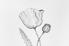 inked flower closeup