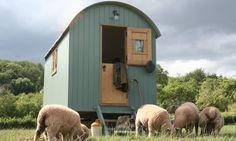 Shepherds Hut.. sheep optional