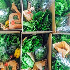 #verse #biologische #seizoensgroenten #fruit #kruiden #speciaal voor #Juicen #elke week 3 nieuwe #recepten #gratis thuisbezorgd http://www.superfoodguru.nl/shop/lidmaatschap-boxen/