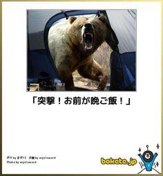なにそれ怖い / 熊に顔面パンチ食らわして生き残ったお爺さんがおられました。あと、熊を投げ飛ばして生き残ったお爺さんもおられました。 Funny Images, Funny Photos, Haha Funny, Hilarious, Funny Stuff, Funny Animals, Cute Animals, Japanese Funny, Ios