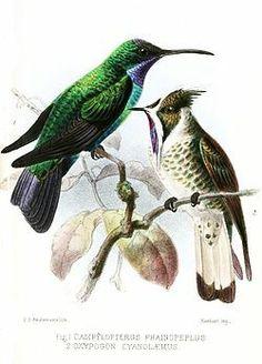 Bird Design, Animals, Miniatures, Animales, Animaux, Animal, Animais