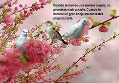 No prometas nada a nadie cuando la alegría te inunde y no contestes ninguna carta cuando te domine el enojo.