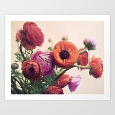 Ranunculus Art Print by Elle Moss. Worldwide shipping available at Society6.com. Just one of millions of high quality products available.