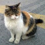 Pick+a+rescued+cat+as+a+pet+for+your+children+-+Beth+explains+why.