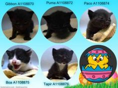 These adorable kitties need placement by 6pm today and appear to have conjunctivitis.