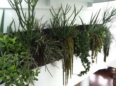 Like the plants used ! Living Wall Planter Vertical Garden Hanging Wall Planter by Woolly Pocket | eBay